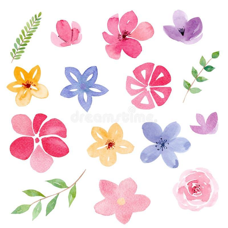 Germogli di fiore ed insieme delle illustrazioni del quadro televisivo dell'acquerello del fogliame illustrazione di stock