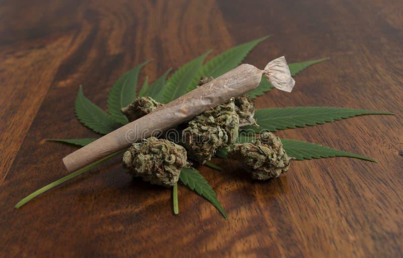 Germogli e foglie di fiore sativa della cannabis, con un giunto rotolato dell'erbaccia fotografie stock
