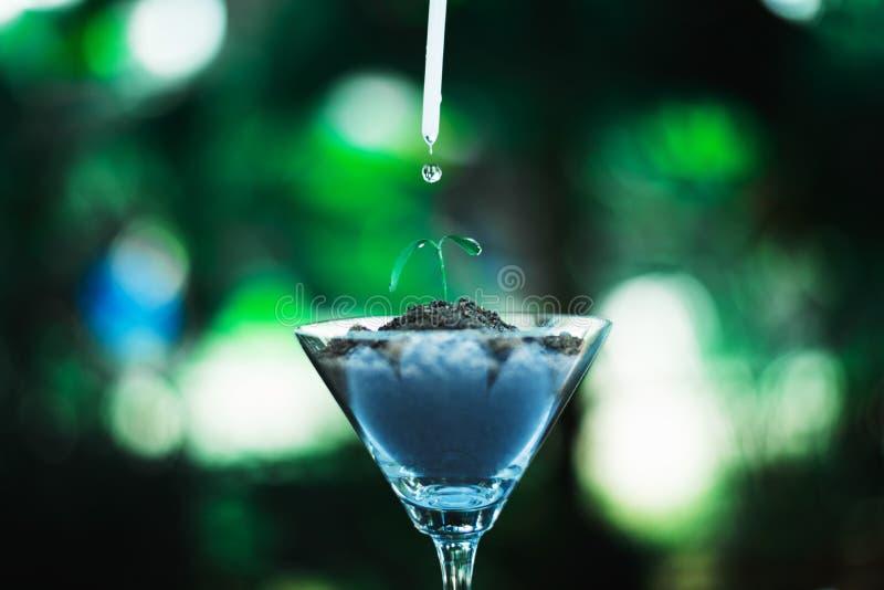 germogli la crescita in vetro con goccia di acqua fotografia stock libera da diritti