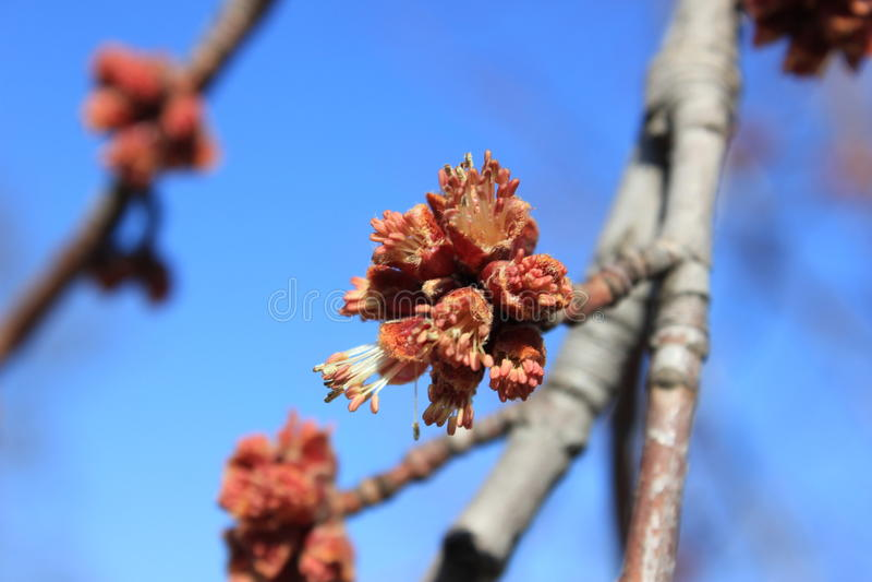 Germogli sboccianti sugli alberi fotografia stock
