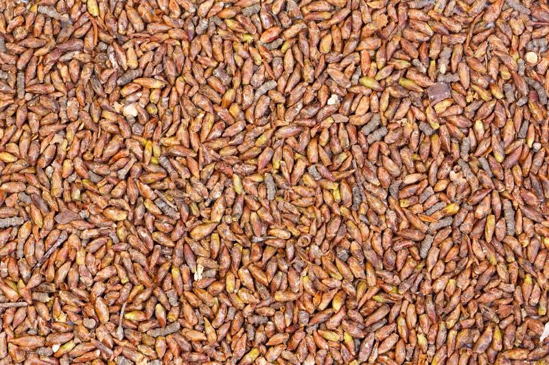 Germogli secchi della betulla, fondo medico delle erbe Struttura delle erbe immagini stock