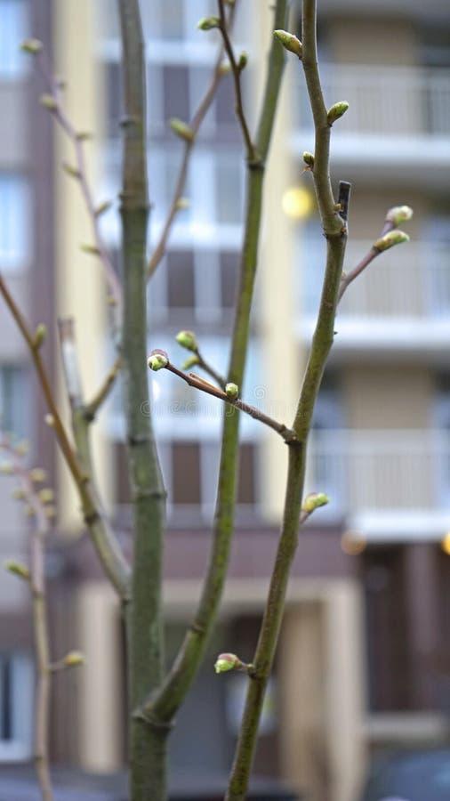 Germogli sugli alberi immagini stock