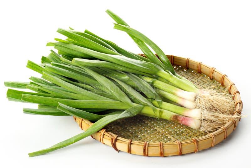 Germoglio dell'aglio immagine stock