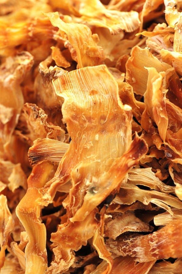 Germoglio di bambù secco immagine stock libera da diritti
