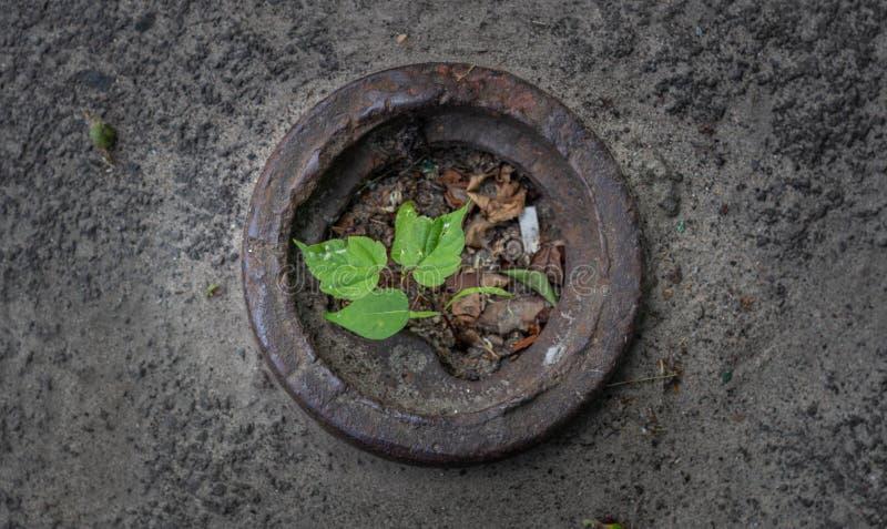 Germoglio di un albero che germoglia dall'asfalto fotografia stock libera da diritti