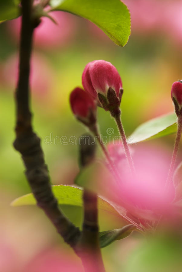 Germoglio e fiore fotografia stock