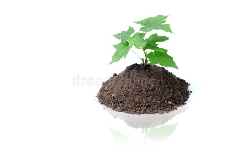 Germoglio e terra verdi immagine stock