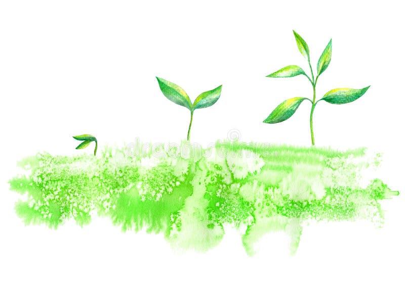 germoglio nell'erba Immagine della primavera fotografie stock libere da diritti