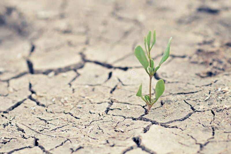 Germoglio verde con terra incrinata asciutta immagine stock libera da diritti