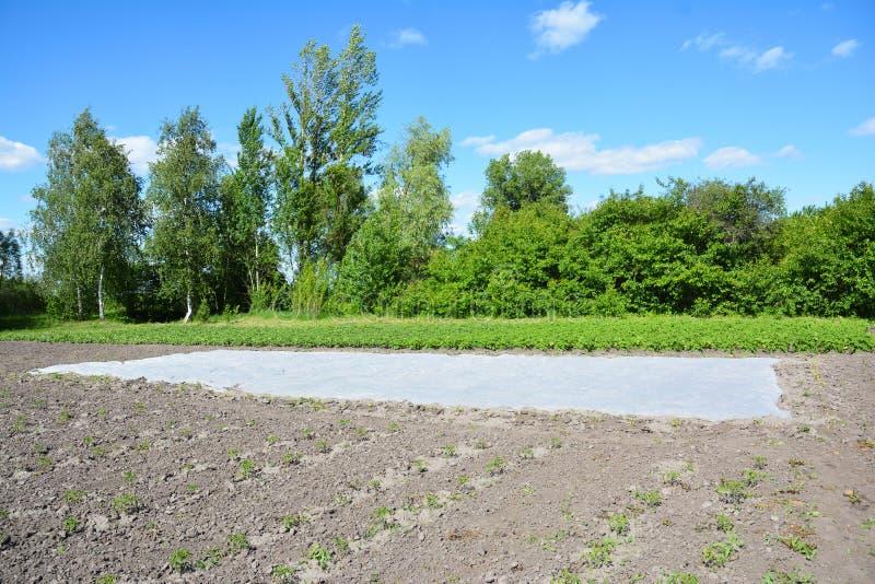 Germoir de Spunbond pour les jeunes plantes végétales au printemps SPU blanche image libre de droits