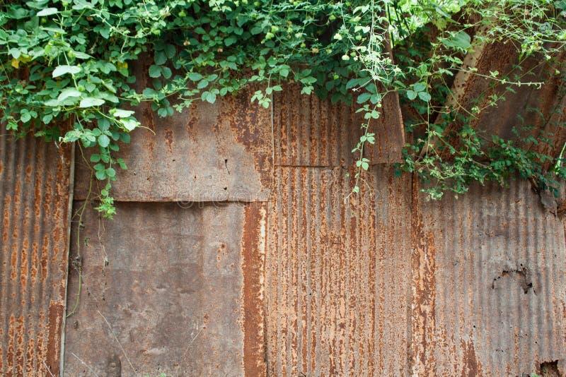 Geroeste textuur en groene bladeren royalty-vrije stock afbeelding