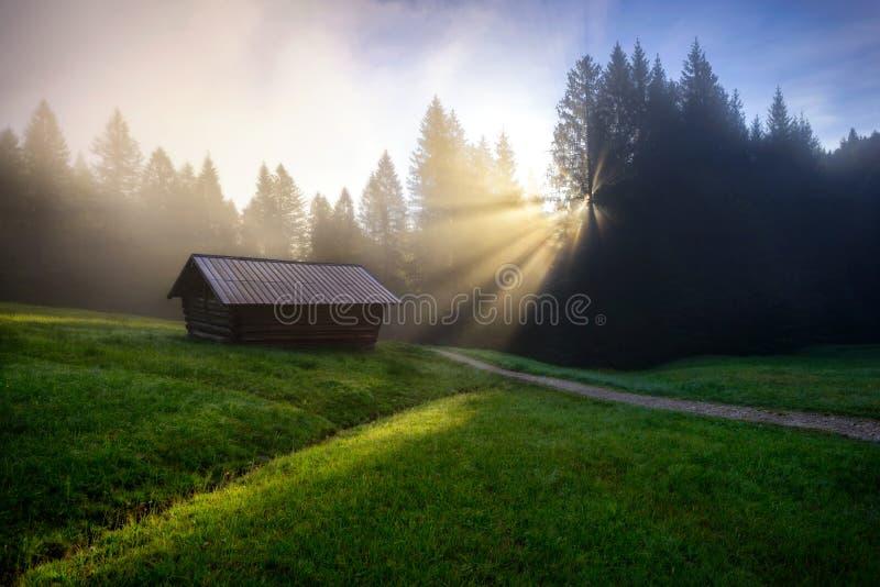 Geroldsee skog under sommardag med dimmig soluppgång över träd, bayerska fjällängar, Bayern, Tyskland arkivbild