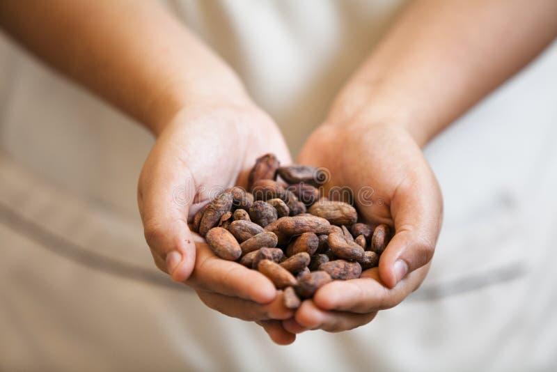 Geroosterde cacaobonen stock afbeelding