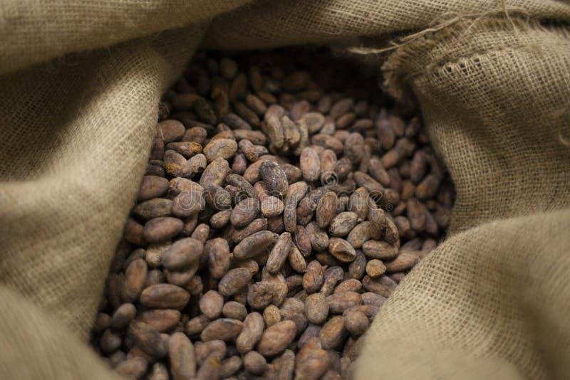 Geroosterde cacaobonen stock afbeeldingen