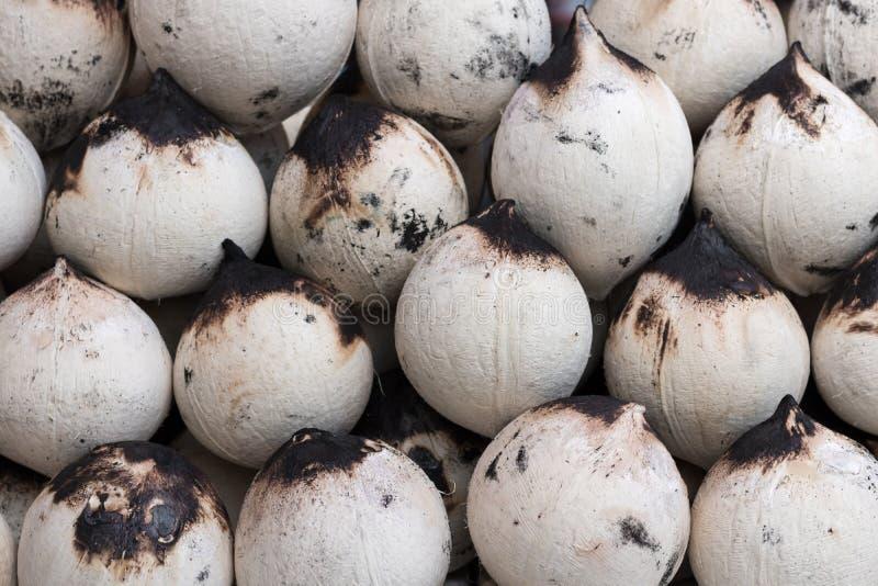 Geroosterde gepelde kokosnoten stock fotografie