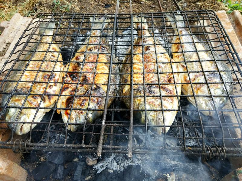 Geroosterde vissen, overzeese brasem, dorada op de grill royalty-vrije stock afbeelding