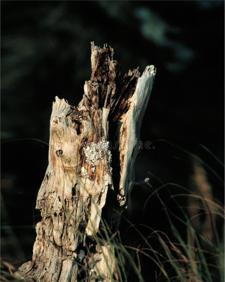 Gerotte boomstomp stock afbeeldingen