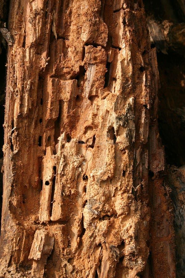 Gerotte houten textuur royalty-vrije stock afbeeldingen