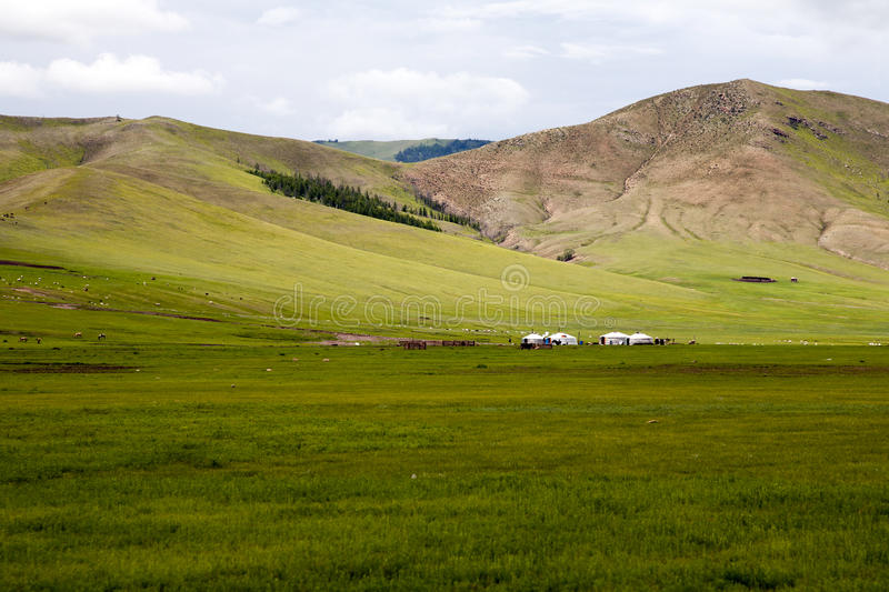 Download Gers on the Steppes stock photo. Image of nomadic, grassy - 36743722