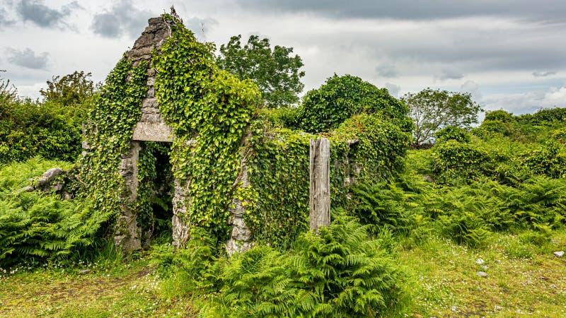Geruïneerd middeleeuws die huis met installaties in het midden van de weide in Burren wordt behandeld stock fotografie