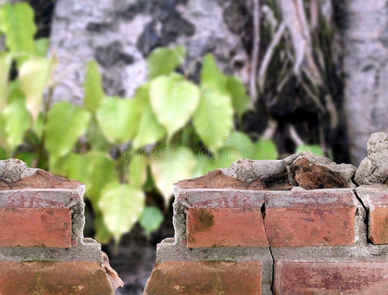 Geruïneerde rode bakstenen muurrand de bodhiboom, een deel van de oude gebroken bouw en bomen in oude tempel van boeddhisme stock fotografie