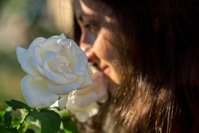 Geruch der Weißrose stockbild