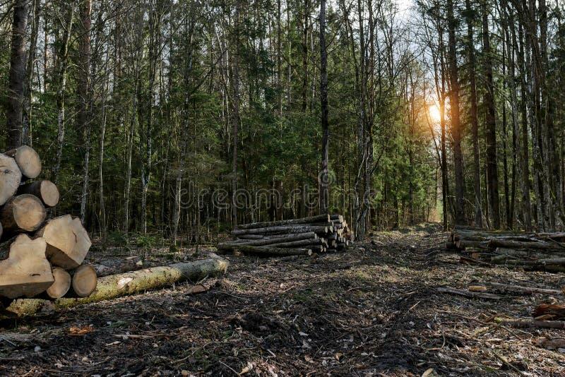Gesägt meldet das Holz an Schlussteil-LKW lud mit den hölzernen Lichtstrahlen, die auf einem Schotterweg reisen Frühlingsstraße lizenzfreie stockfotografie