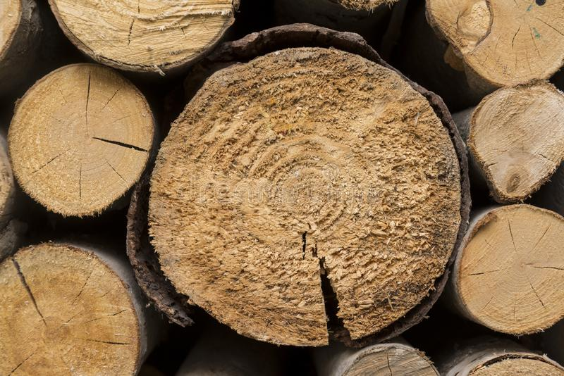 gesägte Baumstämme, gesägt, Holz, hölzerne Beschaffenheit, natürlich, materiell, lizenzfreie stockfotos