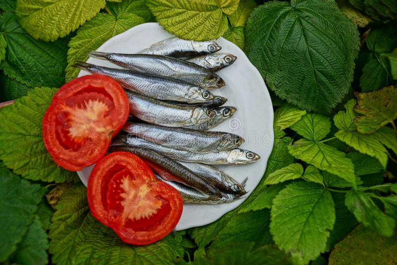 Gesalzene hamsa Fische auf einer Platte mit einer Tomate in den grünen Blättern lizenzfreies stockfoto