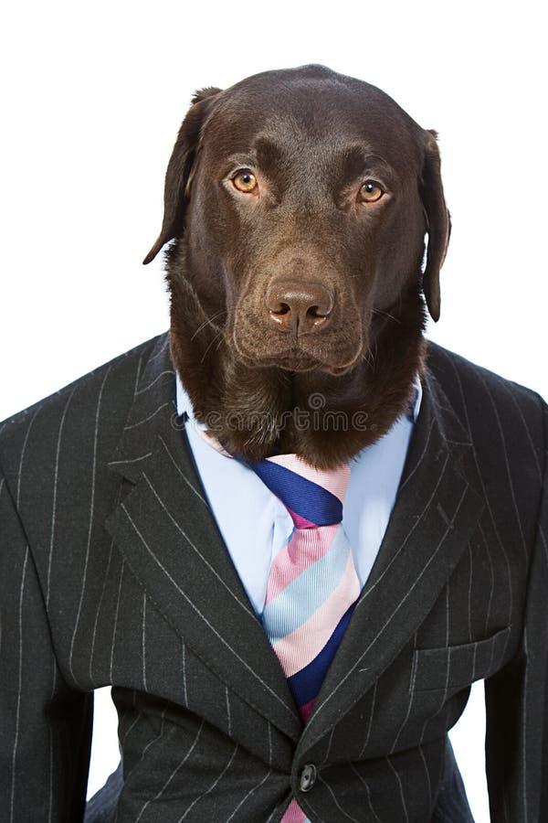 Geschäft Labrador in der Klage stockfoto