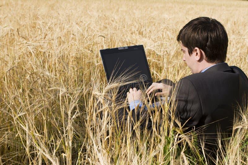 Geschäftsmann auf dem Weizengebiet lizenzfreie stockbilder