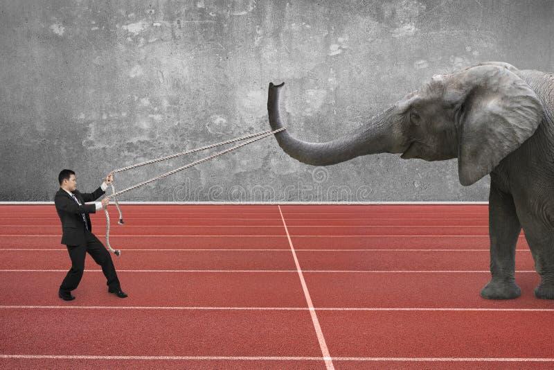 Geschäftsmann unter Verwendung des Seils, das Elefanten zieht lizenzfreies stockfoto