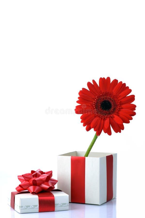 Geschenk und rote Blume lizenzfreie stockfotografie