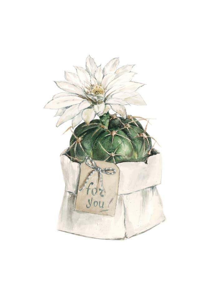 Geschenkkaktus mit Blume, Aquarell vektor abbildung