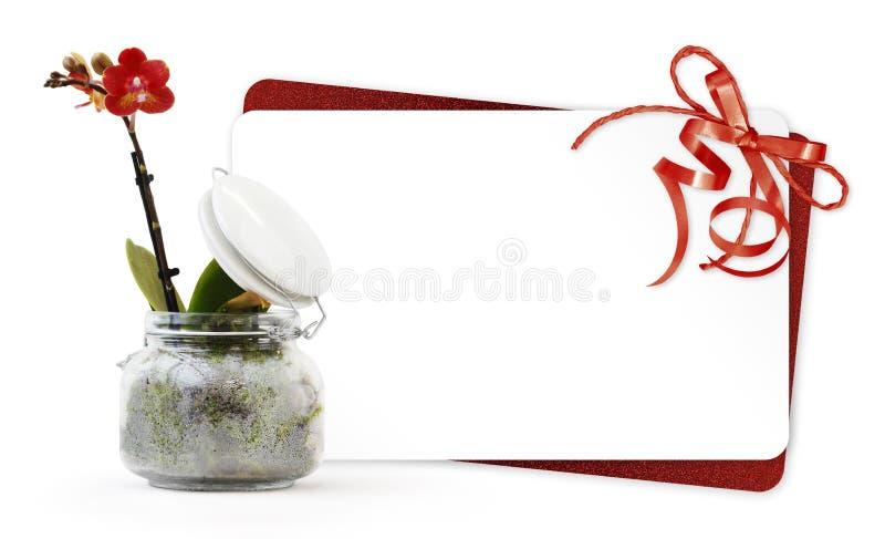 Geschenkkarte und Orchideenblumenanlage im Glastopf mit dem roten Band lokalisiert auf weißem Hintergrund, Blumengeschäft oder an lizenzfreies stockfoto