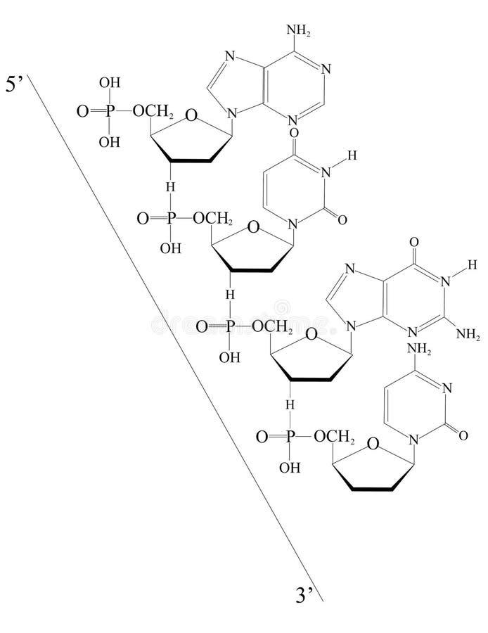 Geschetst Deoxyribonucleic zuur royalty-vrije illustratie