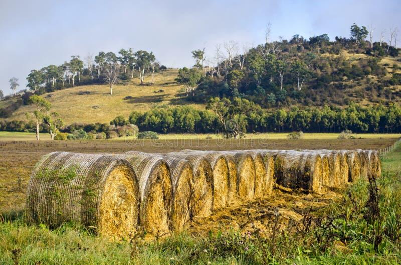 Geschikte hooibalen in het landelijke plaatsen, Tasmanige royalty-vrije stock foto