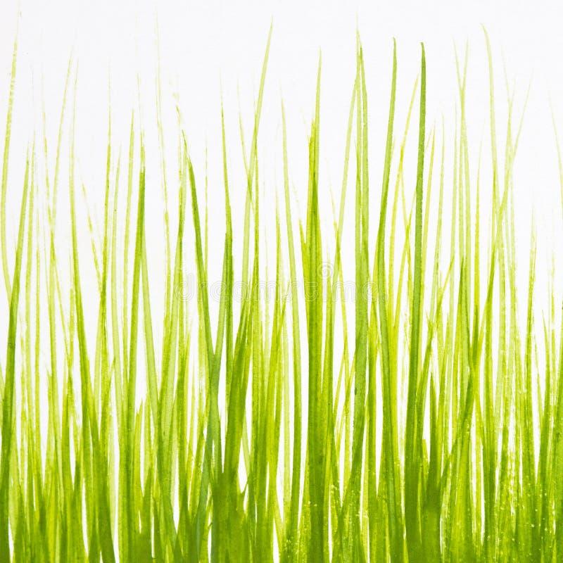 Geschilderd in gouache groen gras op een witte achtergrond stock fotografie