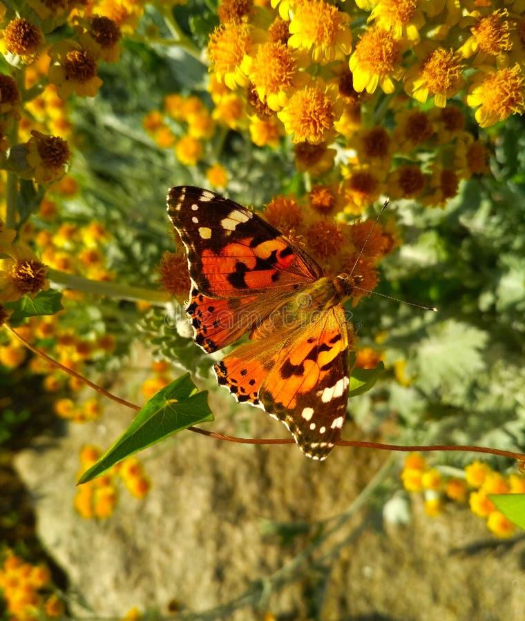 Geschilderde dame op kleine gele bloemen royalty-vrije stock foto