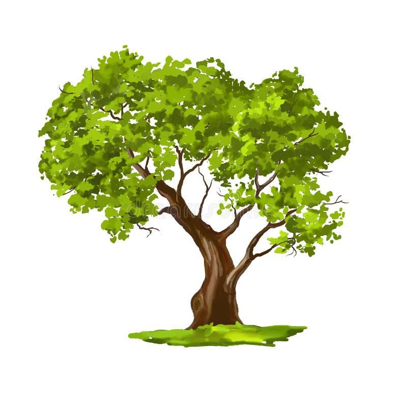 Geschilderde getrokken hand van de boom de vectorillustratie stock illustratie