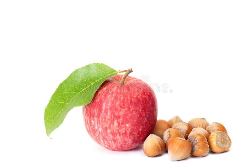 Geschmackvolle Haselnüße und frischer Apfel auf einem Weiß. lizenzfreies stockfoto