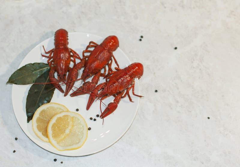 Geschmackvoller Teller mit drei roten gekochten Panzerkrebsen, mit Zitronenkeilen auf einer weißen Marmortabelle lizenzfreie stockbilder