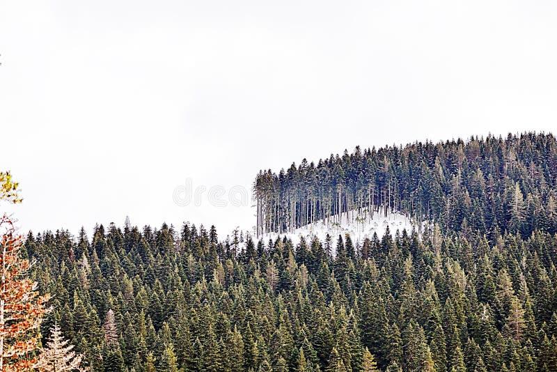 Geschneite Berge und Wälder stockfotografie