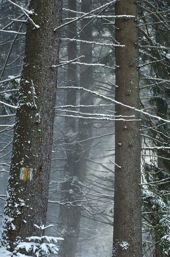 Geschneiter Wald lizenzfreie stockbilder