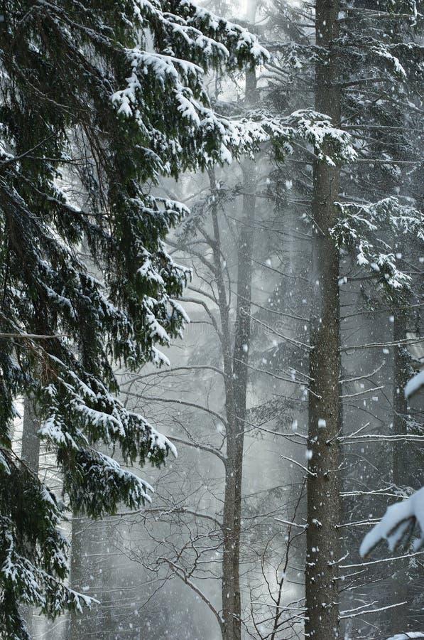 Geschneiter Wald lizenzfreies stockbild