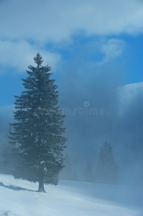 Geschneiter Wald stockfoto