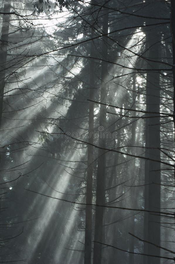 Geschneiter Wald lizenzfreies stockfoto