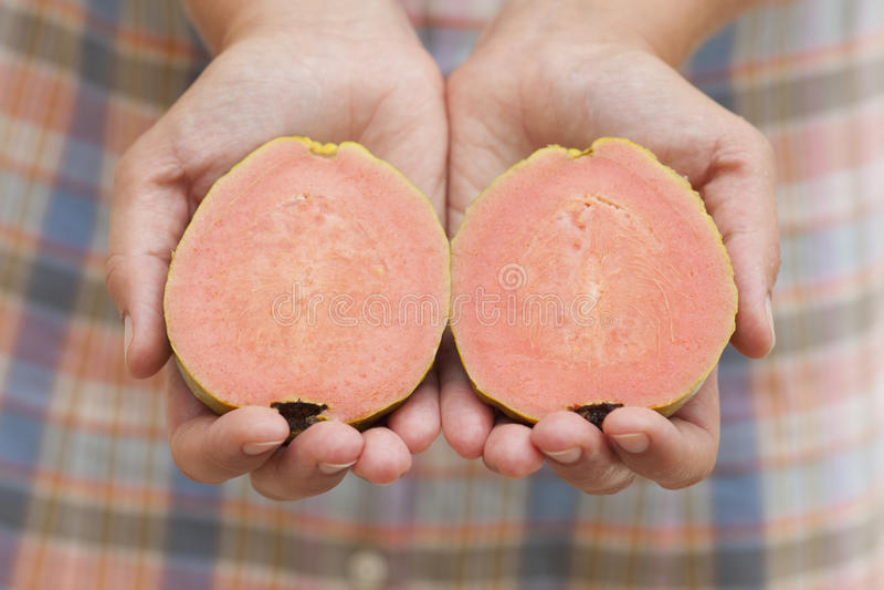 Geschnittene Guajava-Frucht in den Händen der Frau lizenzfreies stockbild