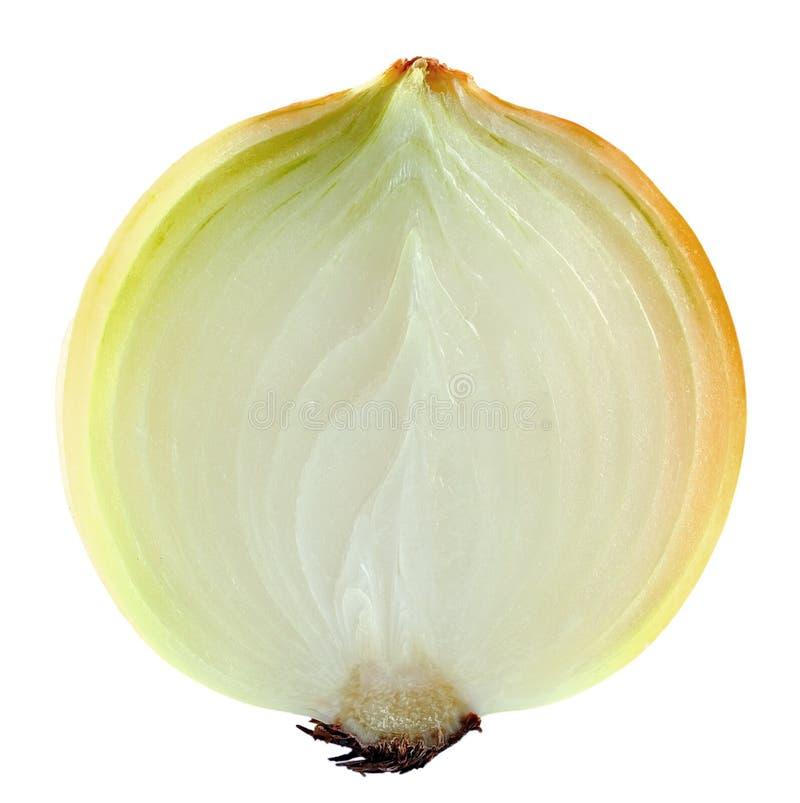 Geschnittene Zwiebel auf weißem Hintergrund lizenzfreie stockfotos
