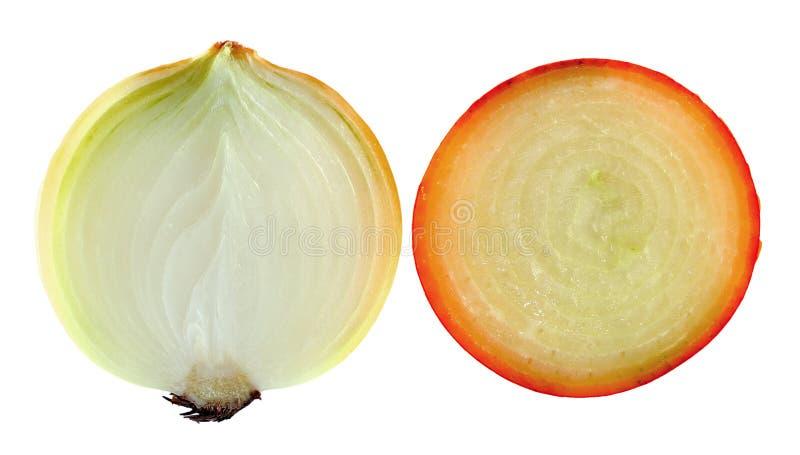 Geschnittene Zwiebel auf weißem Hintergrund stockbild